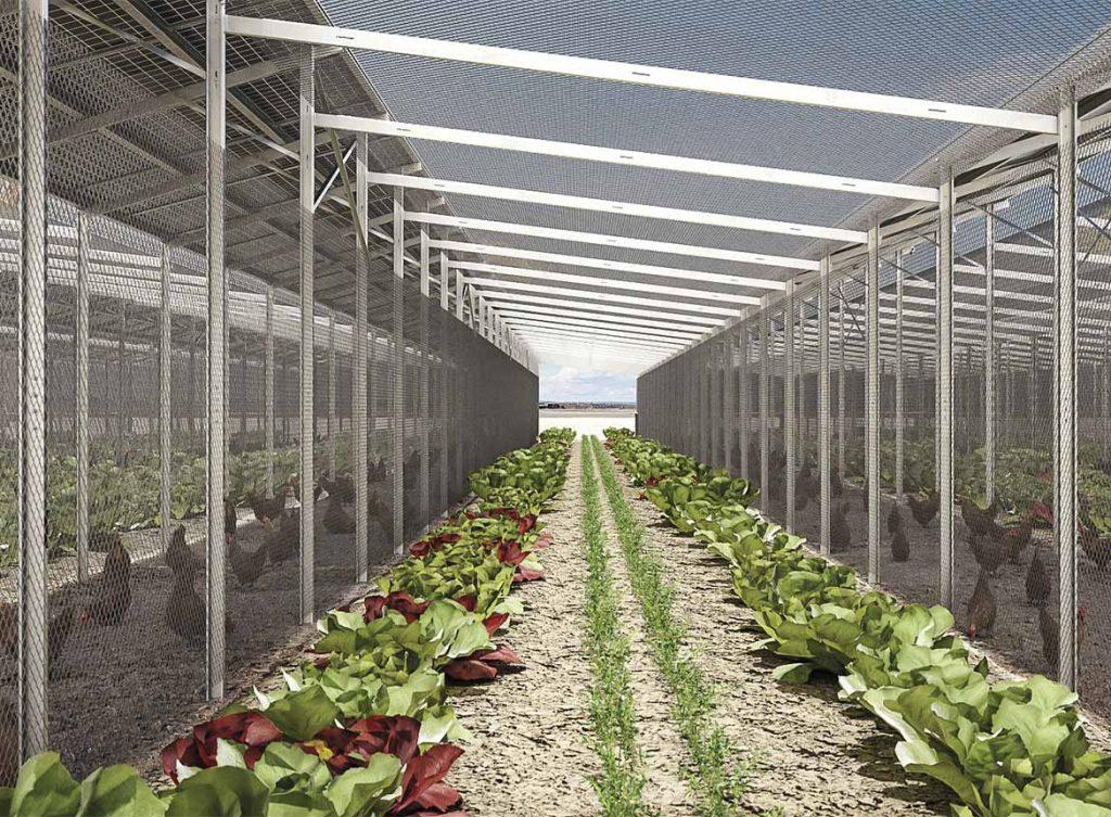Gemüse und Heilkräuter wachsen zwischen und unter Solarmodulen