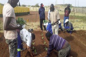 Schulungsteilnehmer lernen, Setzlinge zu pflanzen
