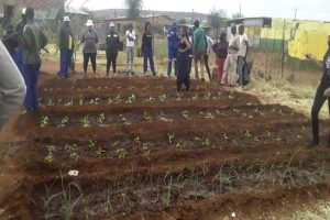 A successful agricultural training day