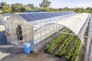 Greenhouses with solar panels
