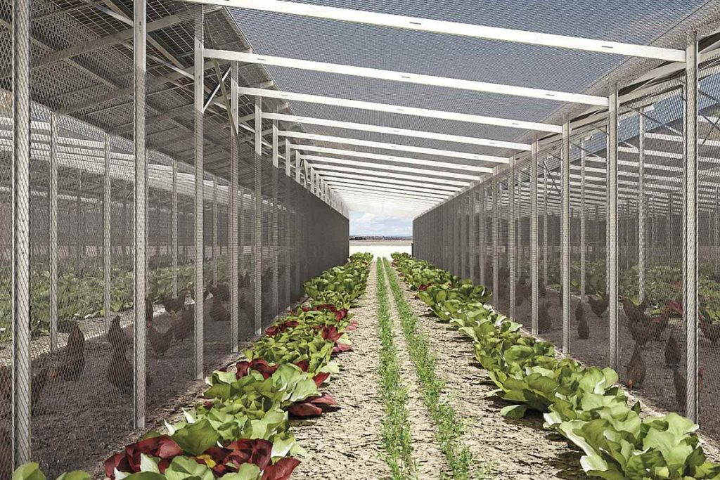 Vegetables and medicinal herbs growing underneath and between solar panels